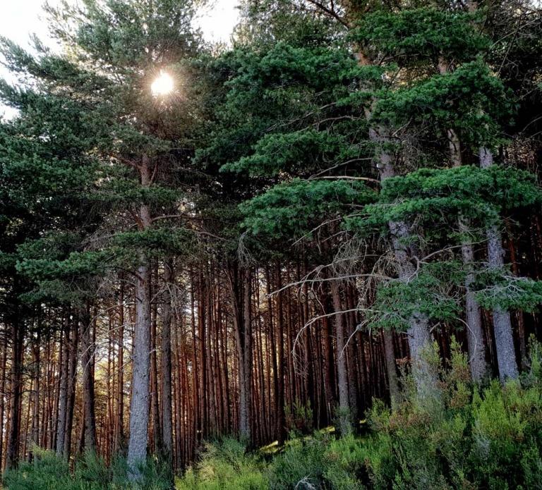 Detalle bosque